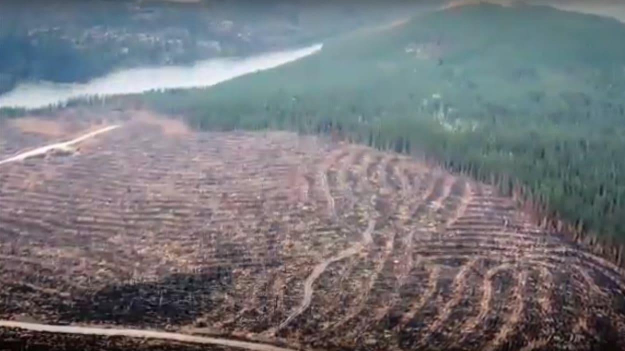 Image tirée d'une vidéo de Greenpeace