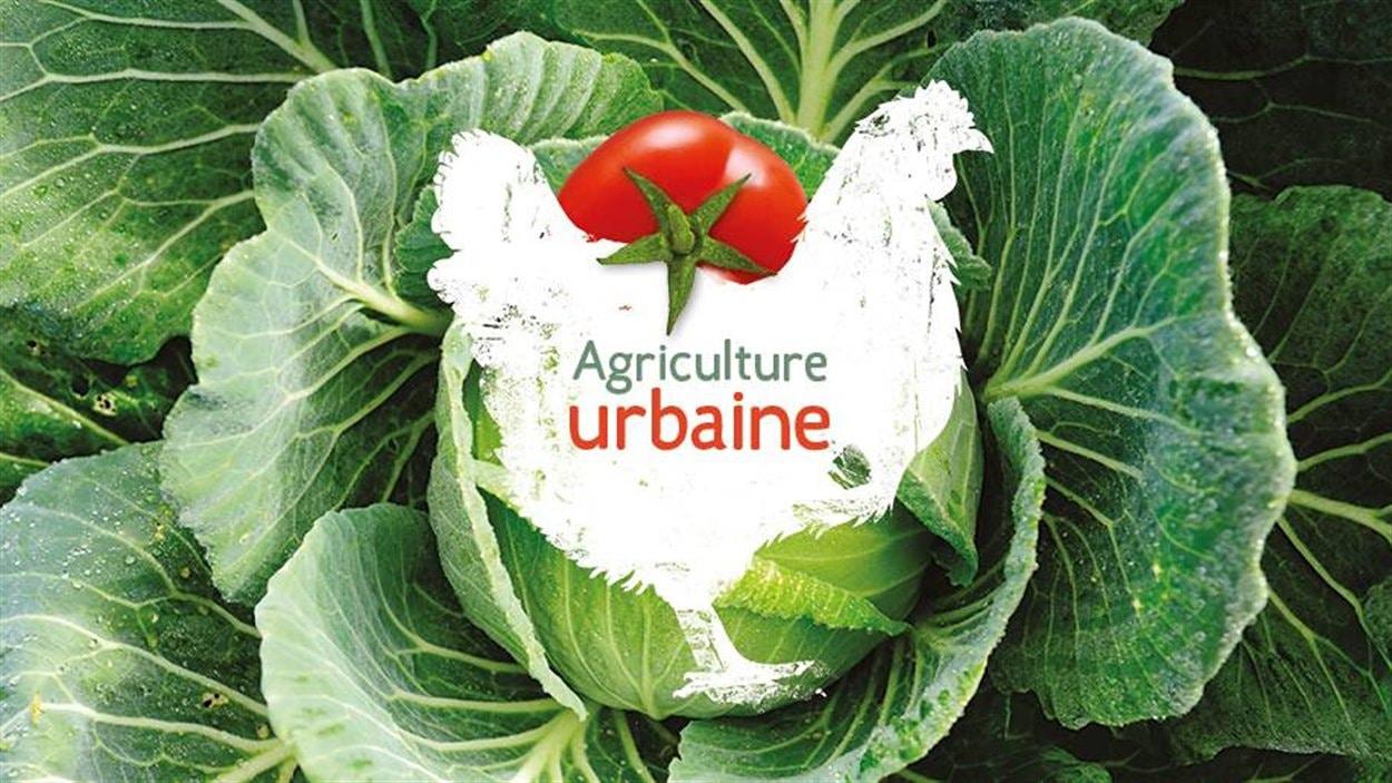 La ville de Gatineau veut encourager l'agriculture urbaine.