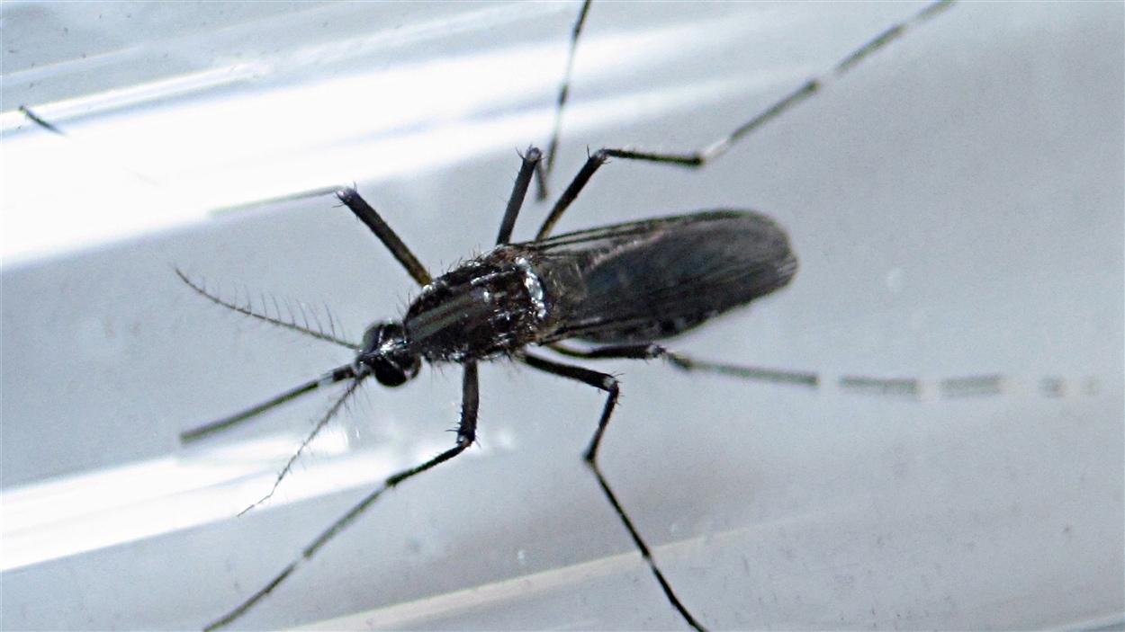 Le virus Zika se propage en grande partie par les moustiques.