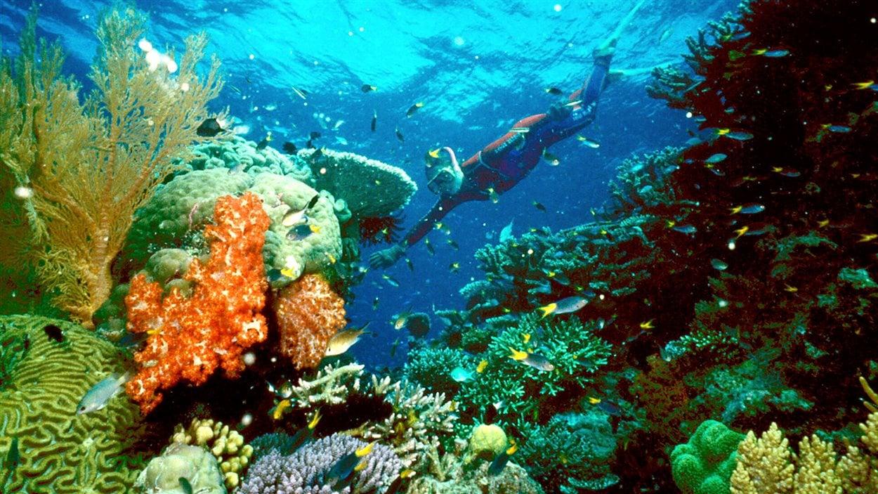 La Grande barrière de corail en des jours meilleurs, en juin 2003.