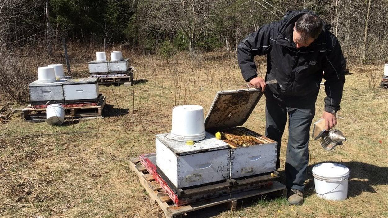 apiculteur-denis-pellerin