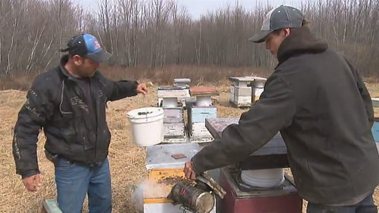 Le vol de ruches à St-Valère inquiète d'autres apiculteurs