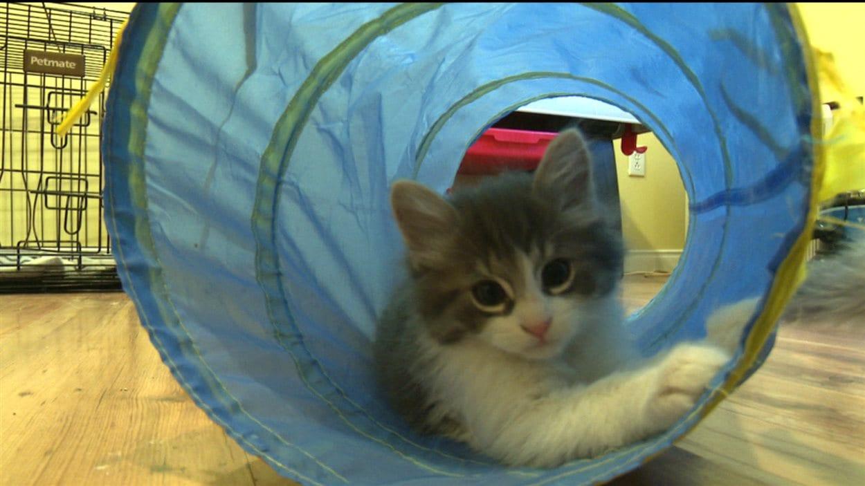 Chat dans une famille d'accueil en attendant de trouver un foyer