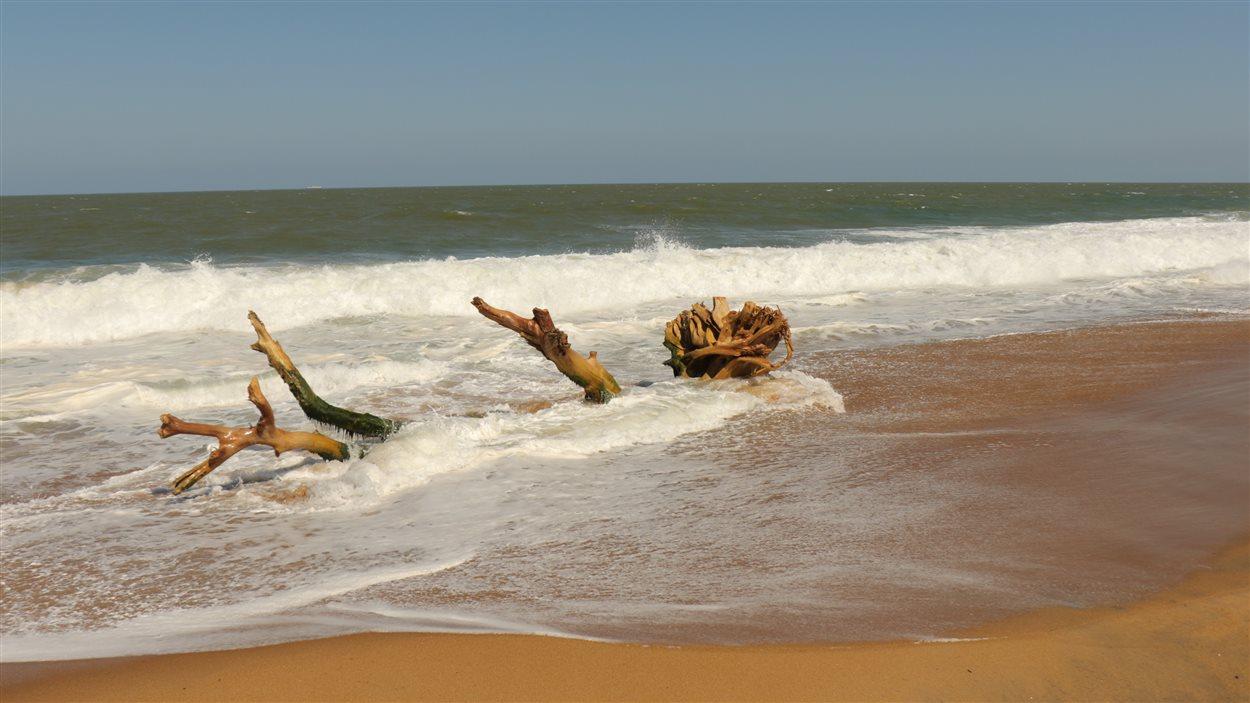 La plage de Regencia, au Brésil