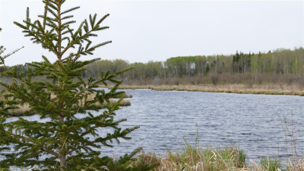 Le marais Ominnik, un endroit sur le sentier sud du lac Clear.