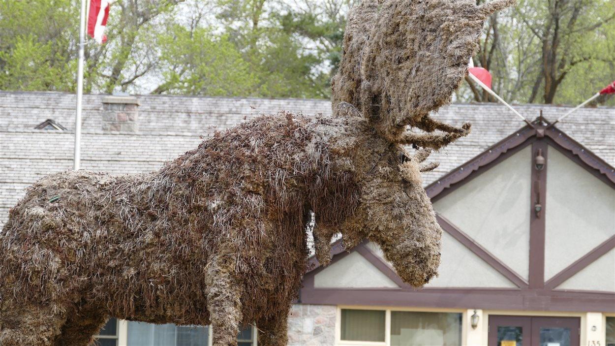 Un orignal en mousse de tourbe qui est installé dans le milieu du village de Wasgaming au coeur de la vie sociale du Parc national du Mont-Riding.