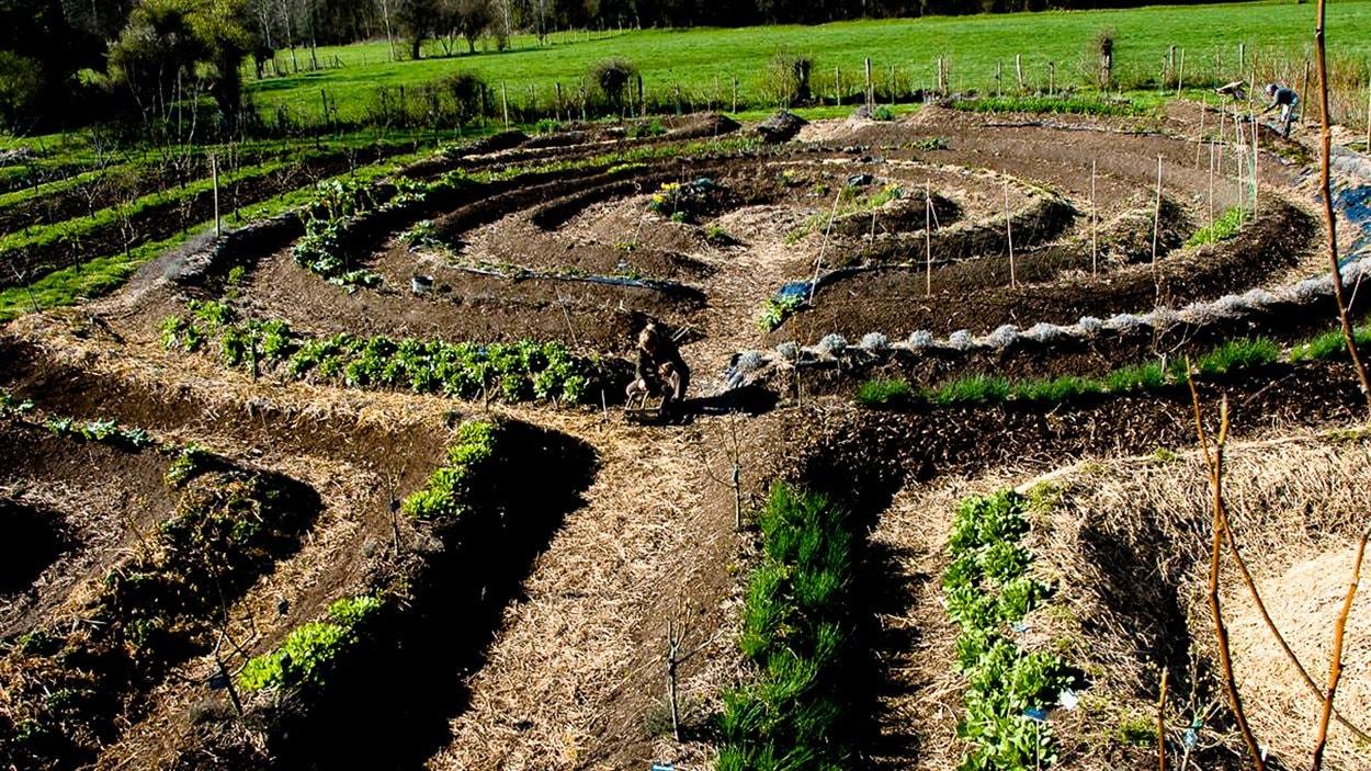 Un projet de permaculture cité en exemple dans «Demain»