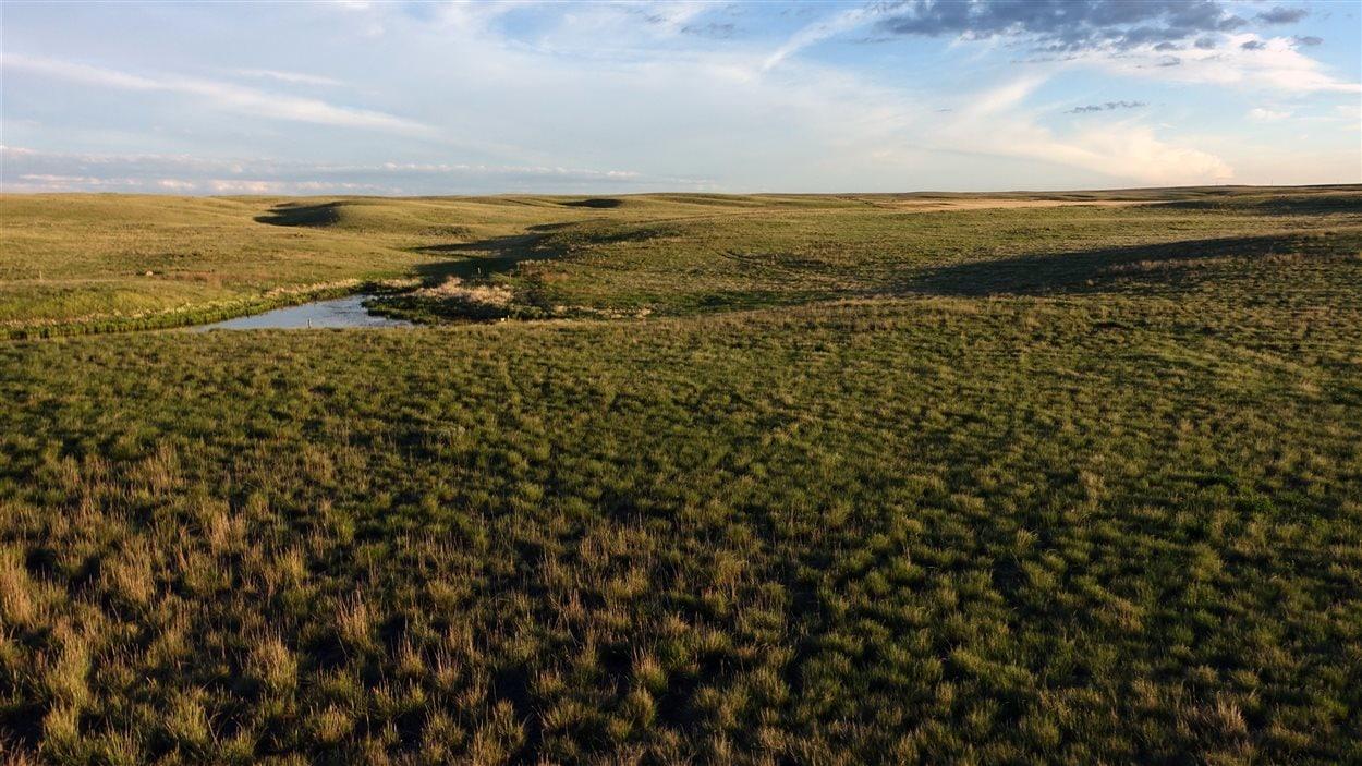 Les prairies de la Saskatchewan