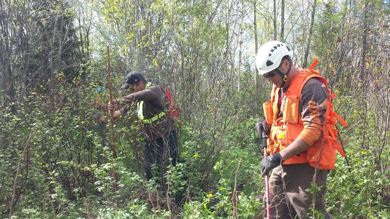 Battue en forêt pour retrouver des traces de Sindy Ruperthouse, disparue depuis le printemps 2014