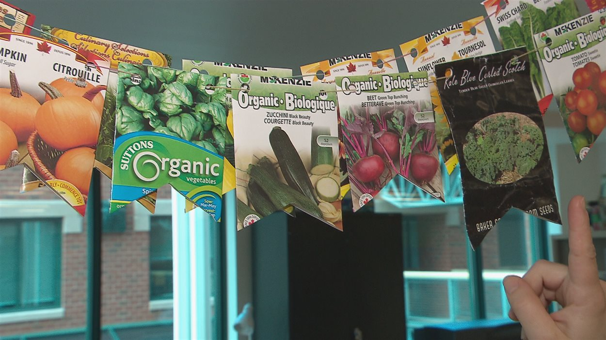Des semences offertes à la grainothèque de la bibliothèque de Moncton