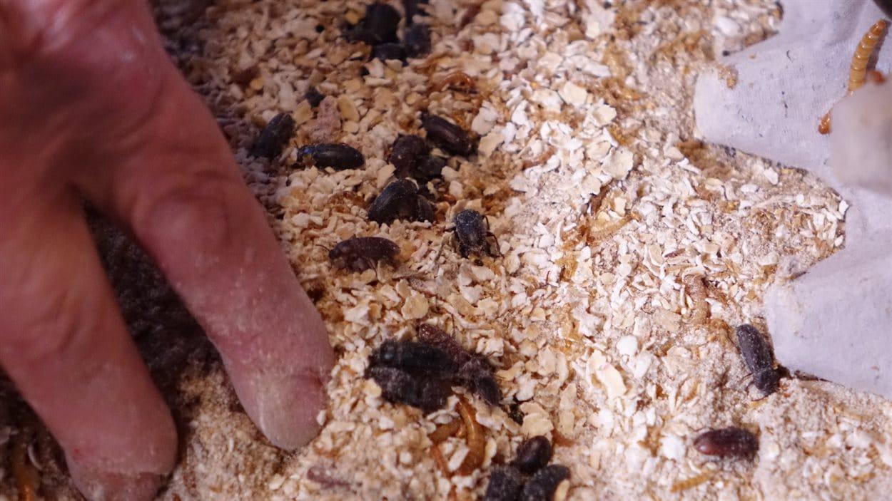 Sonia Plante espère amener son élevage à 700 000 vers de farine par mois durant la première année.