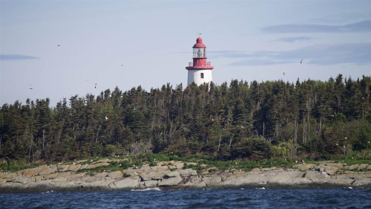 Le temps d'une journée, le Service canadien de la faune nous a permis d'accoster sur l'île Bicquette, dont l'accès est habituellement interdit.