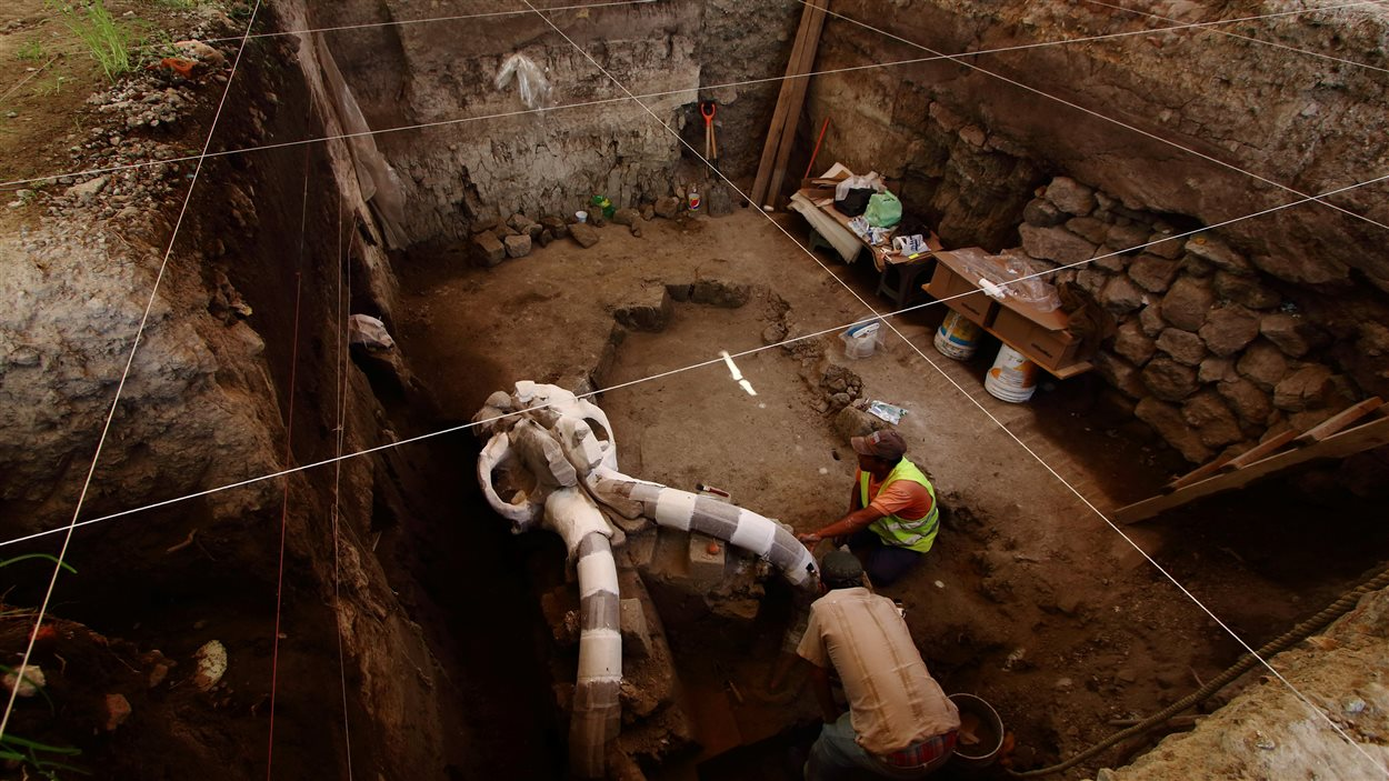 Les ossements du mammouth ont été trouvés à deux mètres de profondeur dans une rue de Tultepec.