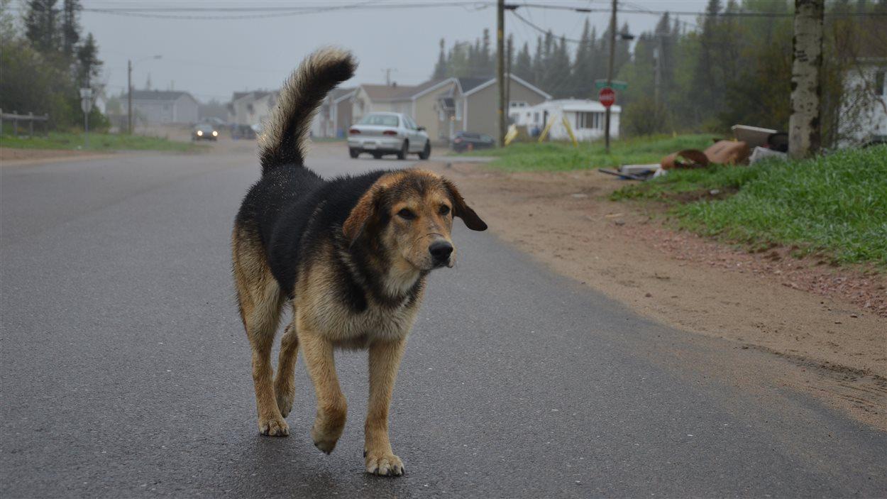 Un chien à Pessamit.