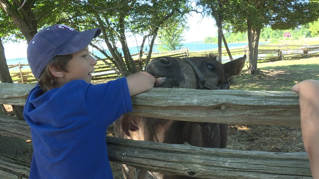 Ethan Tomney découvre les animaux de la ferme.