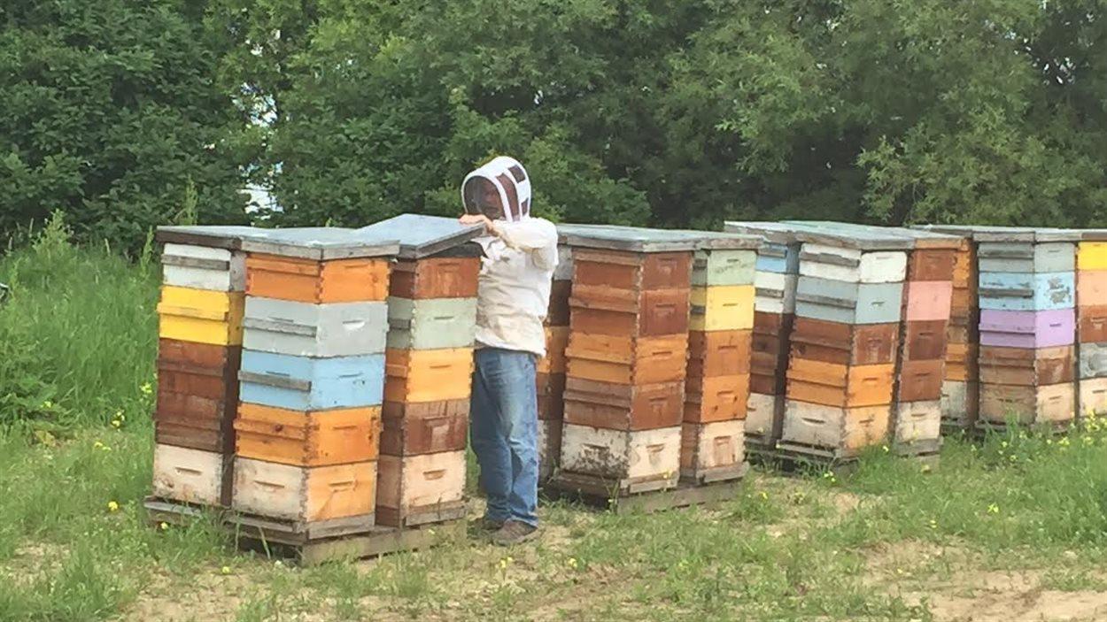 Pierre Faure en train de s'occuper de ses ruches.