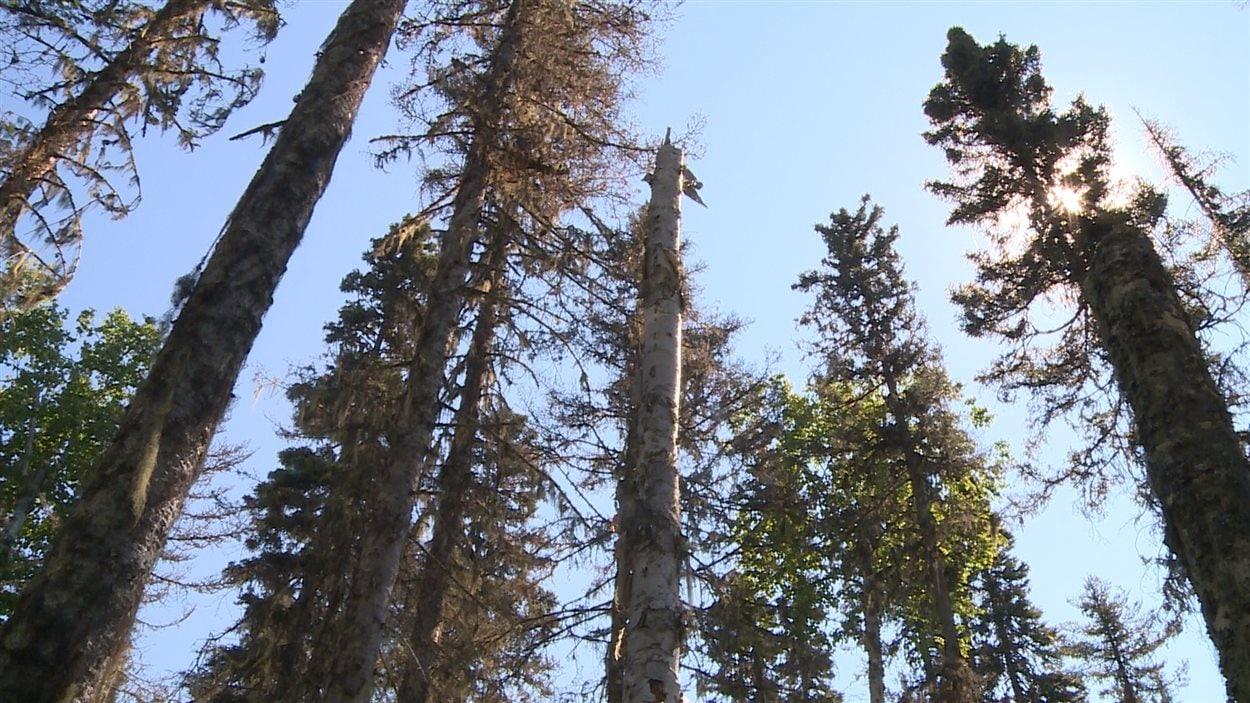 Forêt boréale de la Côte-Nord