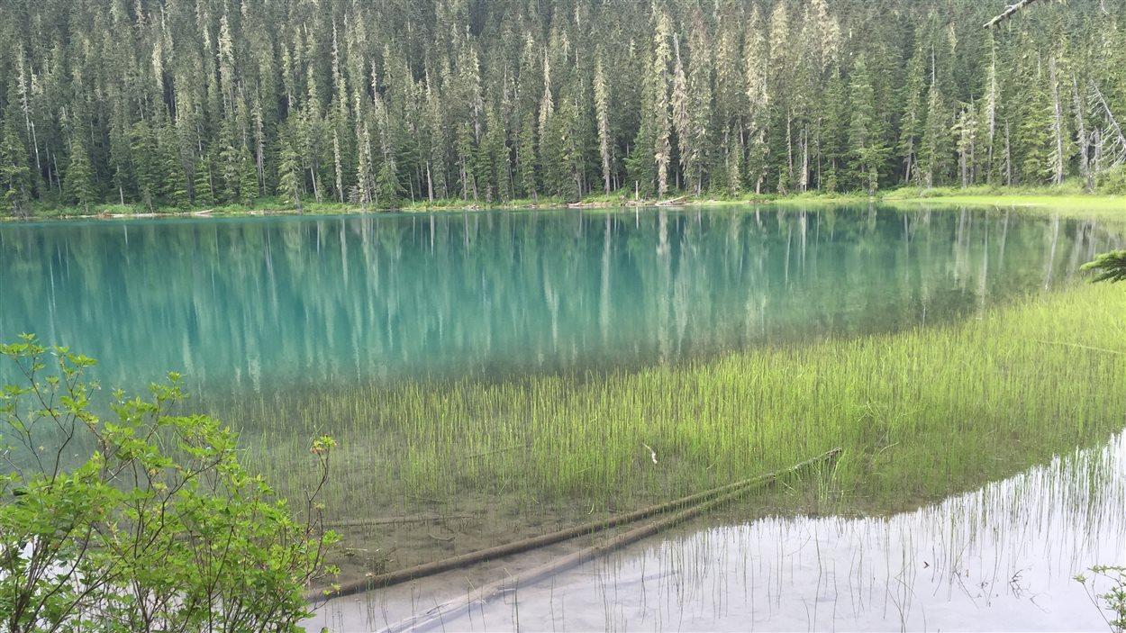 Le premier lac Joffre se trouve à environ cinq minutes de marche du stationnement