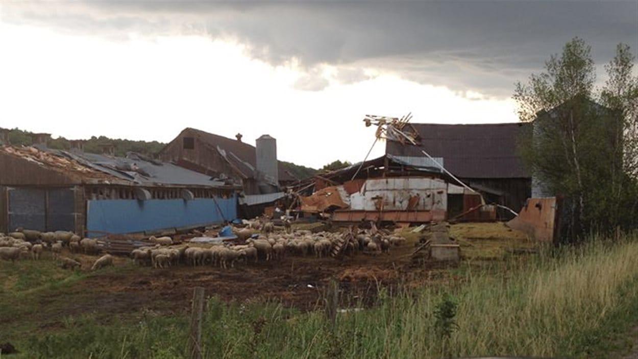 La Bergerie Hexagone de Richmond détruite par le vent.