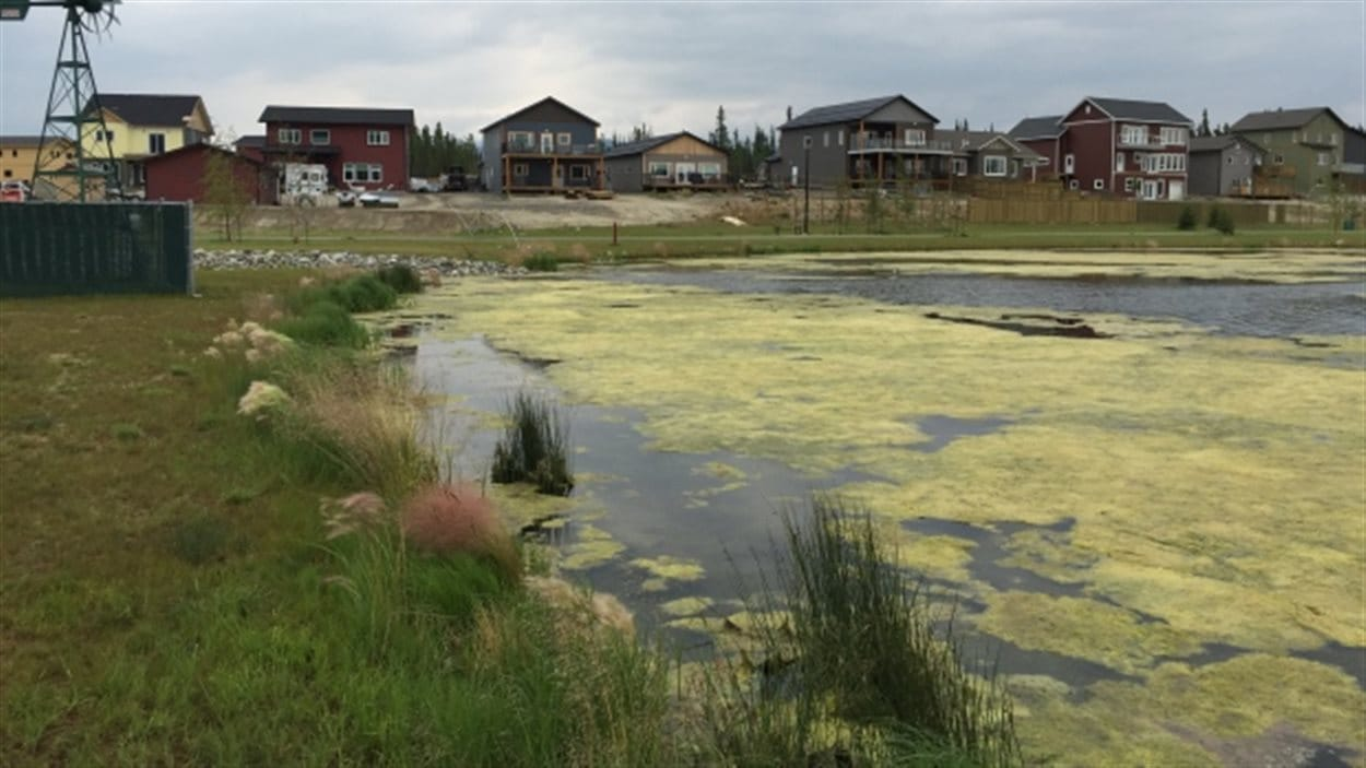 L'étang artificiel Rain Garden dans le quartier Whistle Bend, à Whitehorse au Yukon.