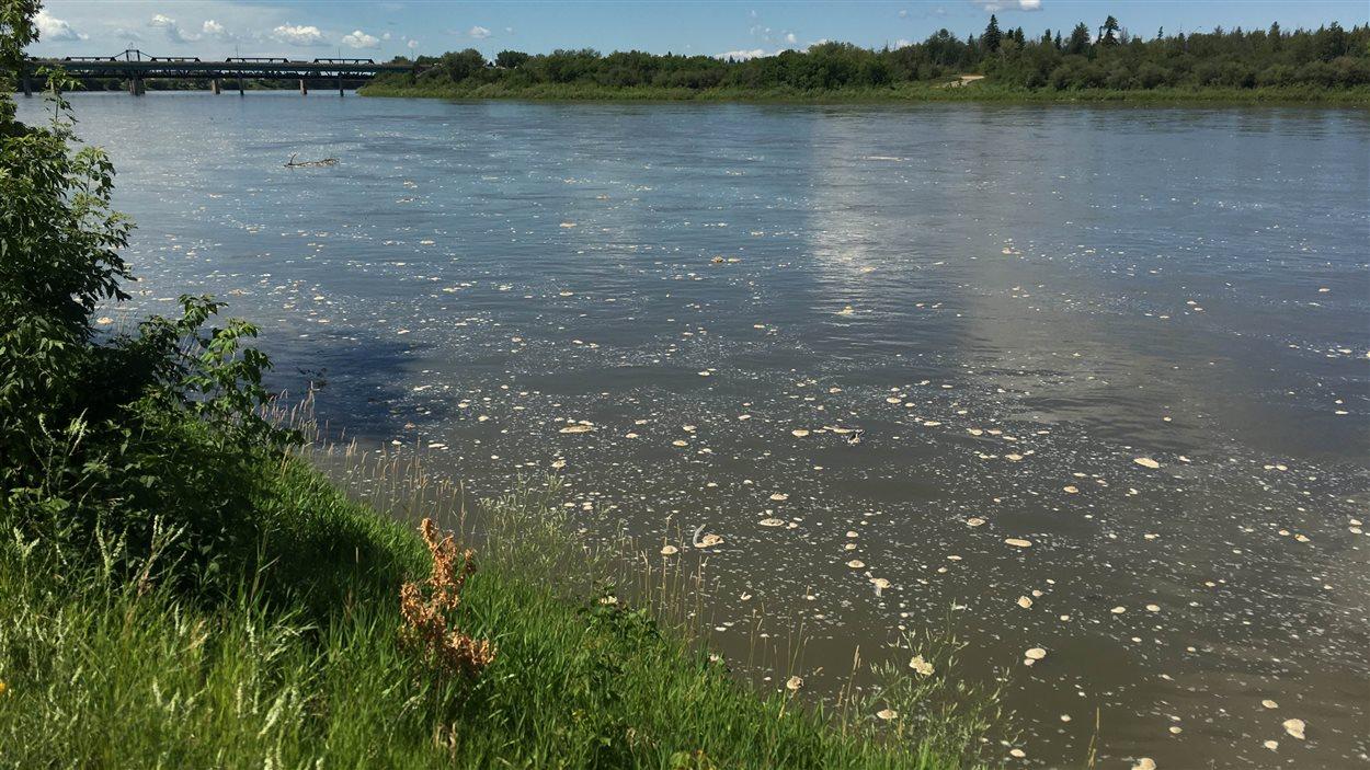 Déversement de pétrole dans la rivière Saskatchewan Nord