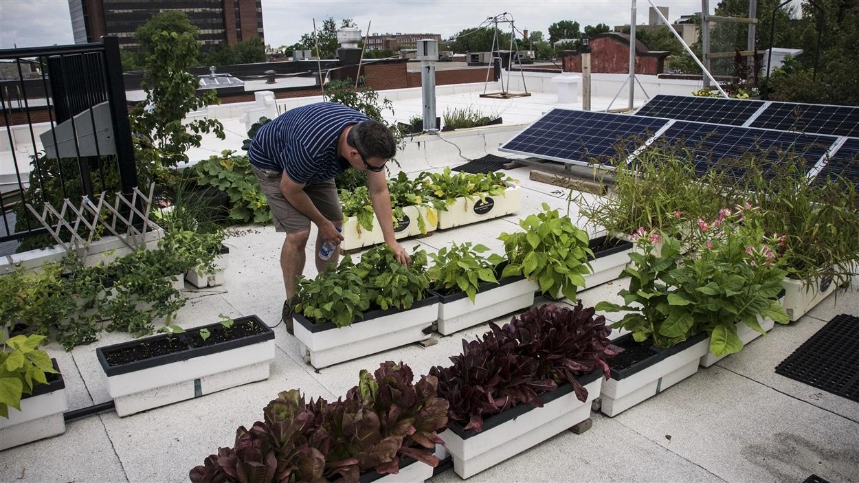 Martin Desmarais entretient le jardin de son toît.