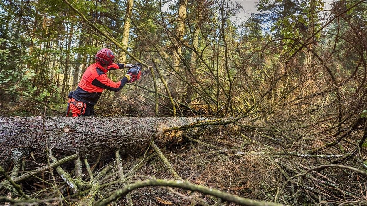 Un homme qui coupe un arbre dans la forêt.