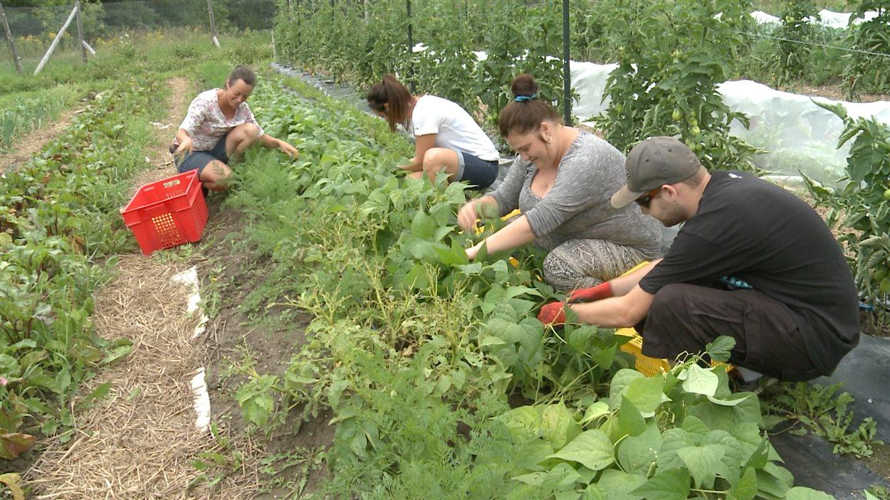 Les jardins Cultiver pour nourrir, de Mont-Laurier, ont permis à 85 personnes de préparer leur entrée sur le marché du travail depuis 4 ans.