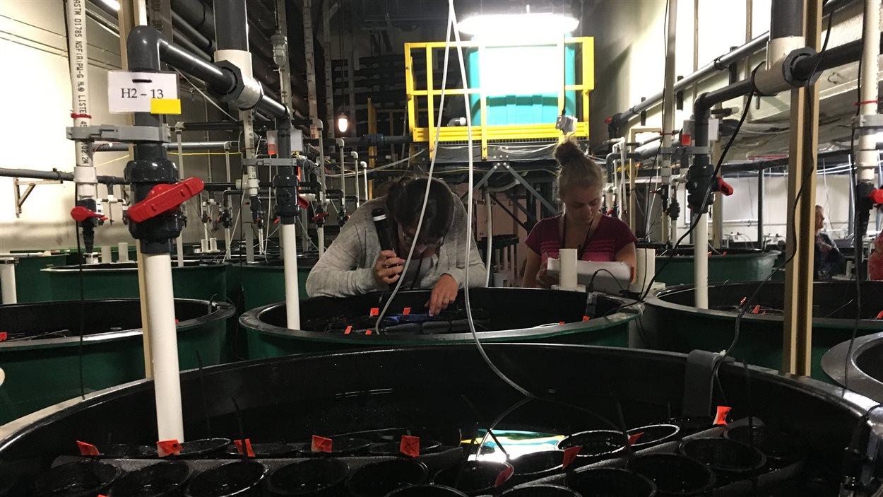 Les chercheurs font leur étude à la station biologique de Saint-Andrews, au Nouveau-Brunswick.