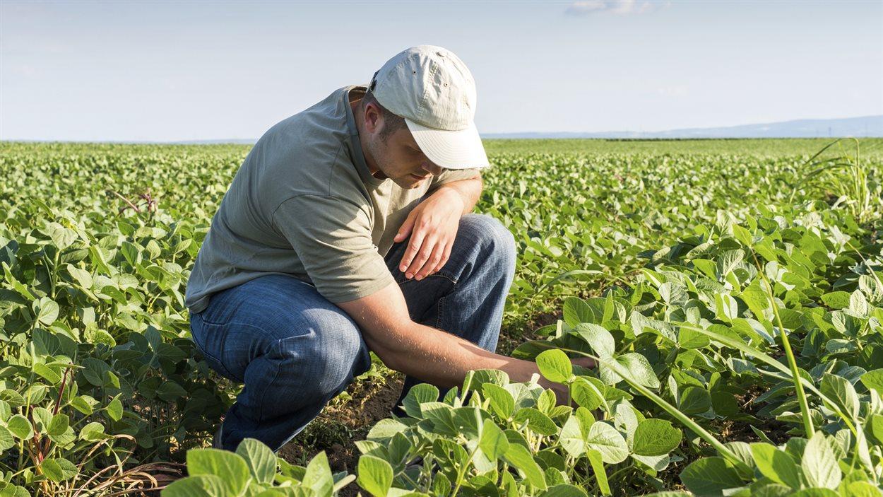 Un cultivateur dans son champ