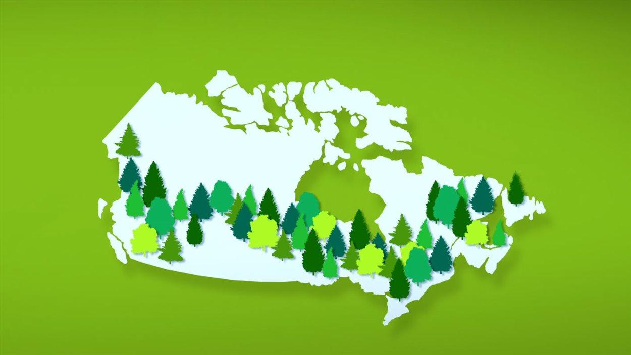 La forêt privée occupe le tiers du territoire canadien.