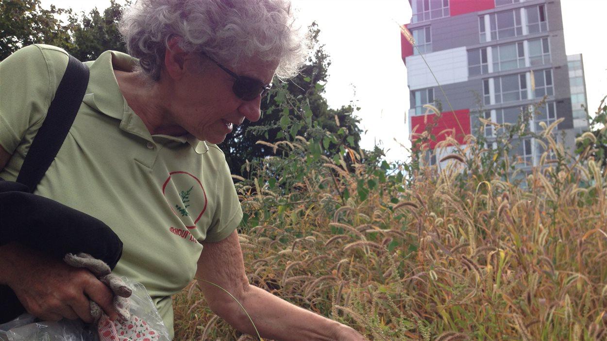 Sur les terrains publics ou privés, Irène Mayer arrache des dizaines de plans d'herbe à poux tous les jours.