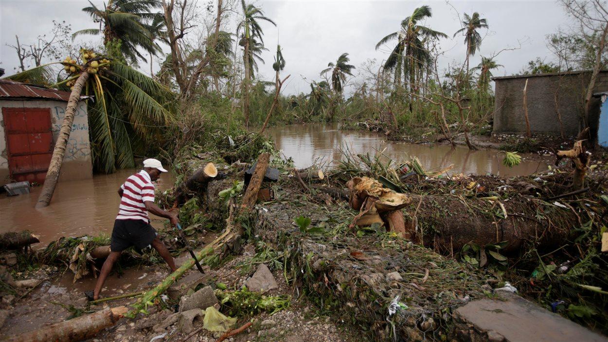 Un homme coupe les branches d'un arbre tombé après le passage de l'ouragan Matthew en Haïti.