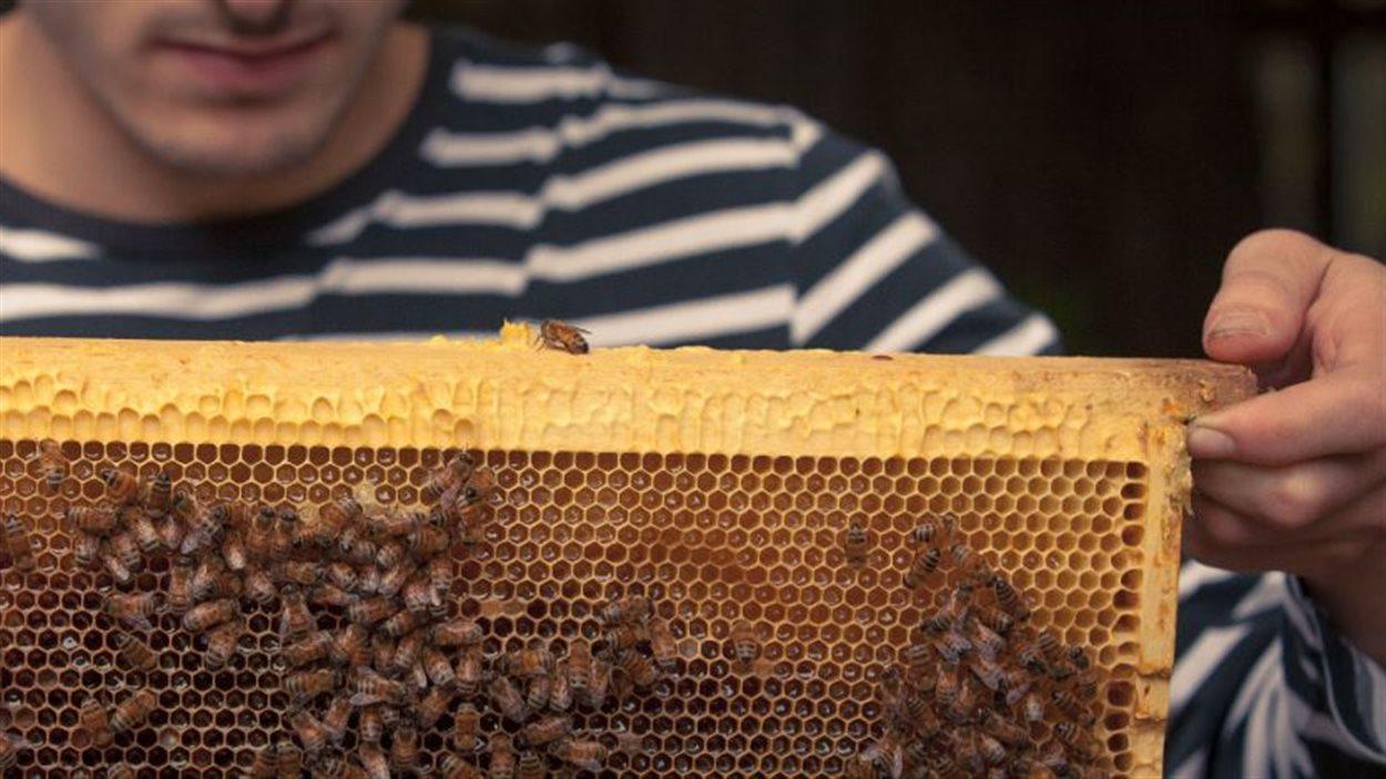 Alvéole accompagne les individus et les entreprises dans le maintien de colonies d'abeilles en ville