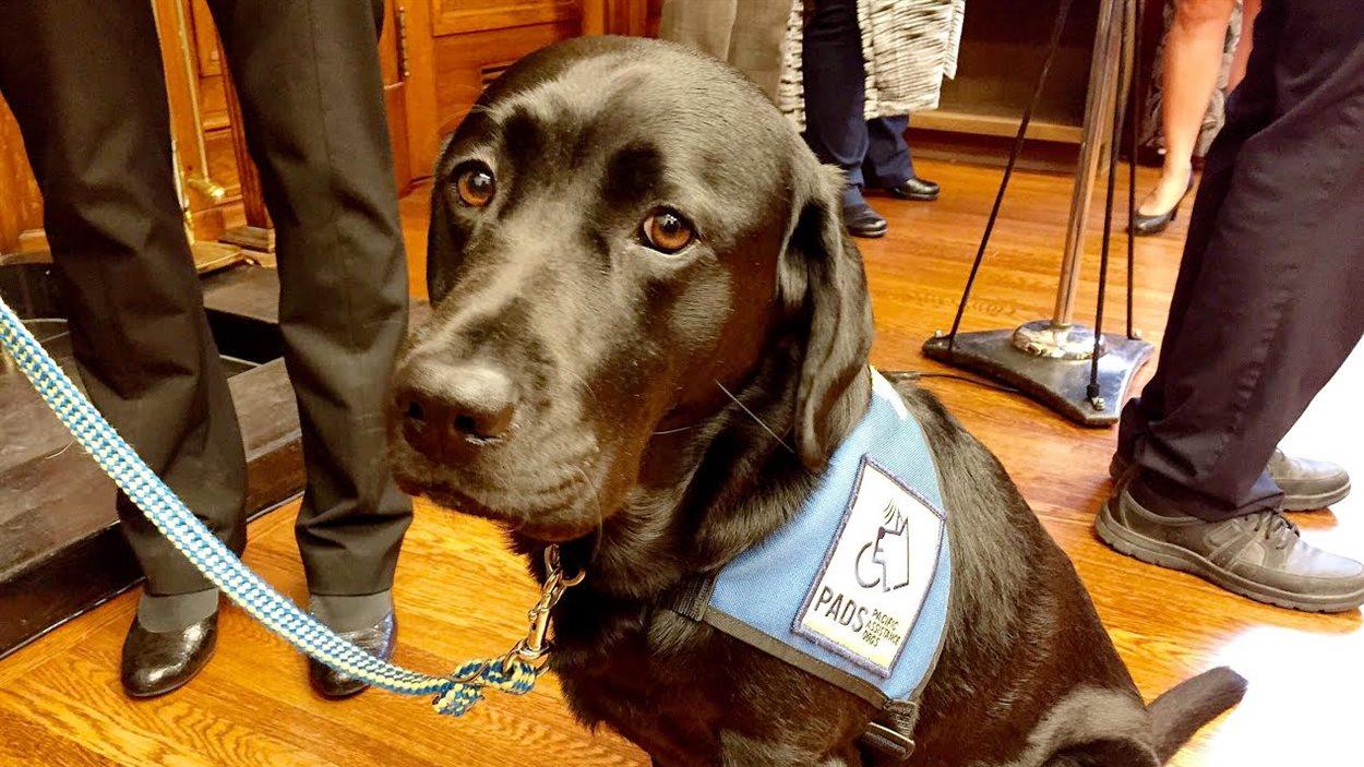 Le gouvernement du Manitoba dit qu'un chien d'assistance comme Milan exerce des effets bénéfiques sur l'anxiété et le stress des victimes.