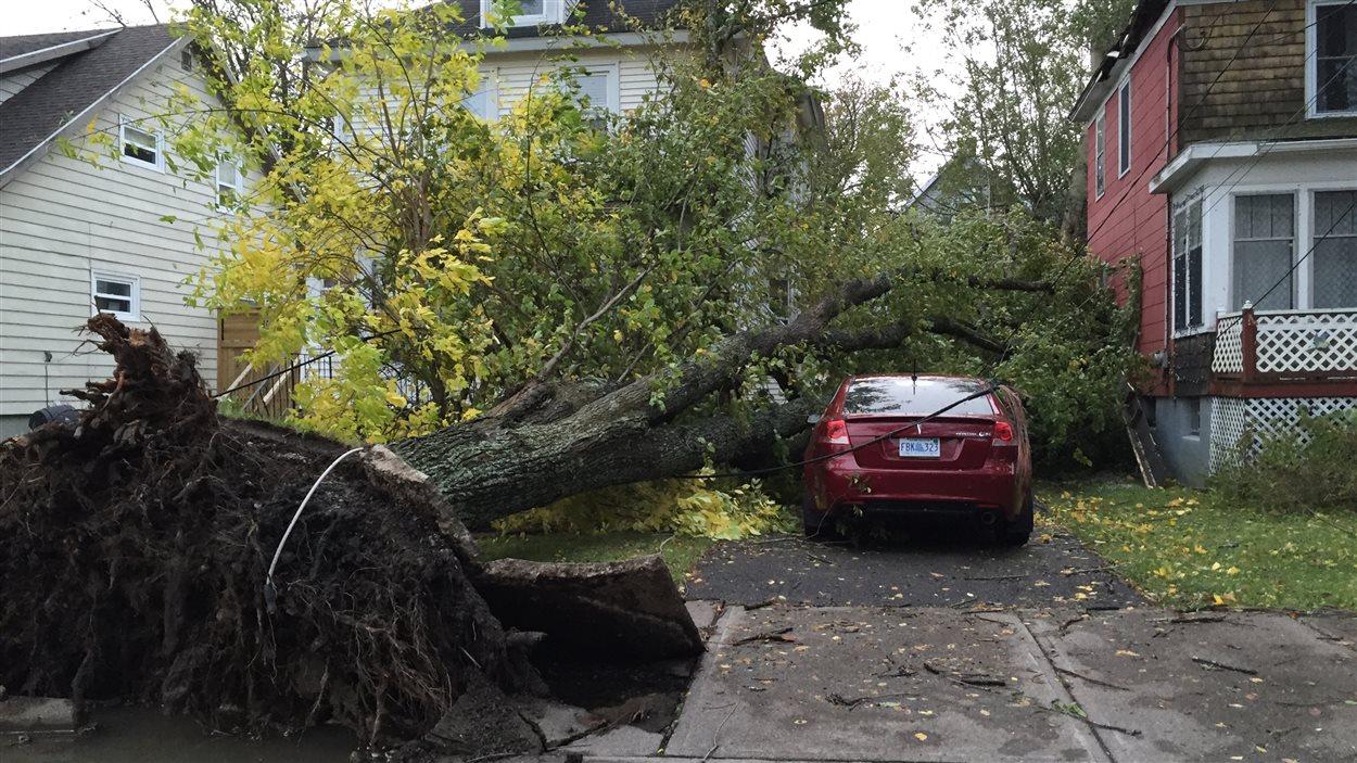 Un arbre est tombé sur une maison à Sydney en Nouvelle-Écosse