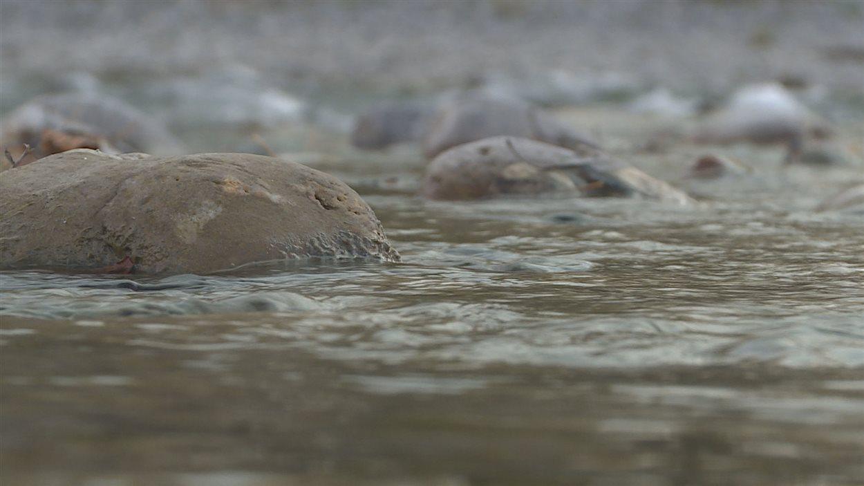 La rivière Sheep à Okotoks dans le sud de l'Alberta.