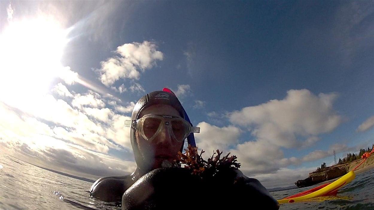 Plonger pour cueillir des algues