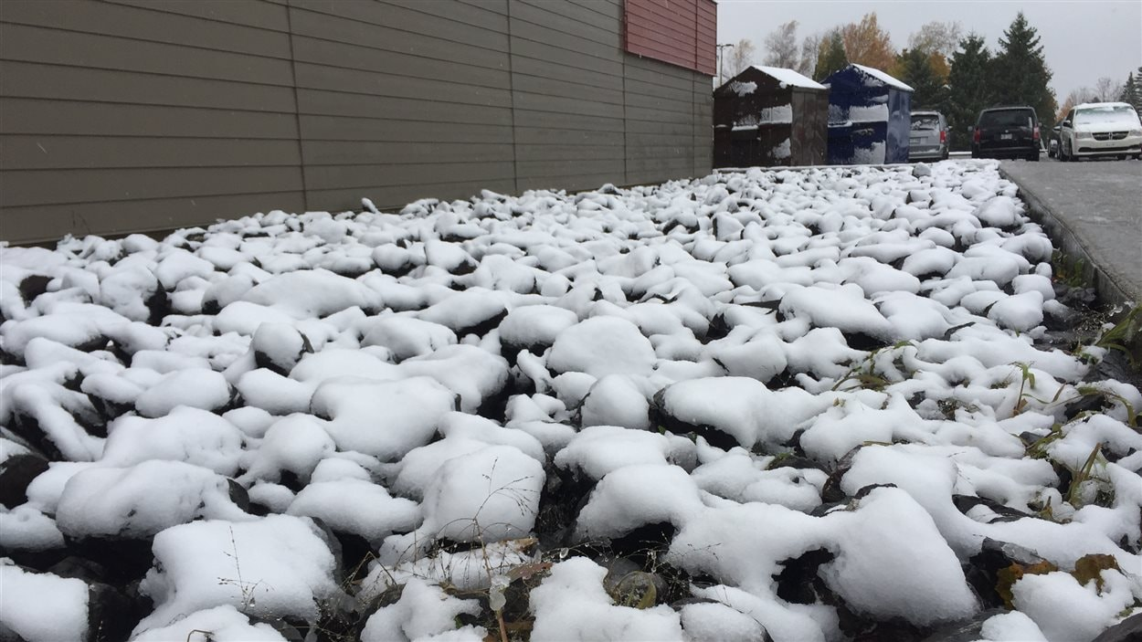 Tapis de neige à Saint-Étienne-de-Lauzon