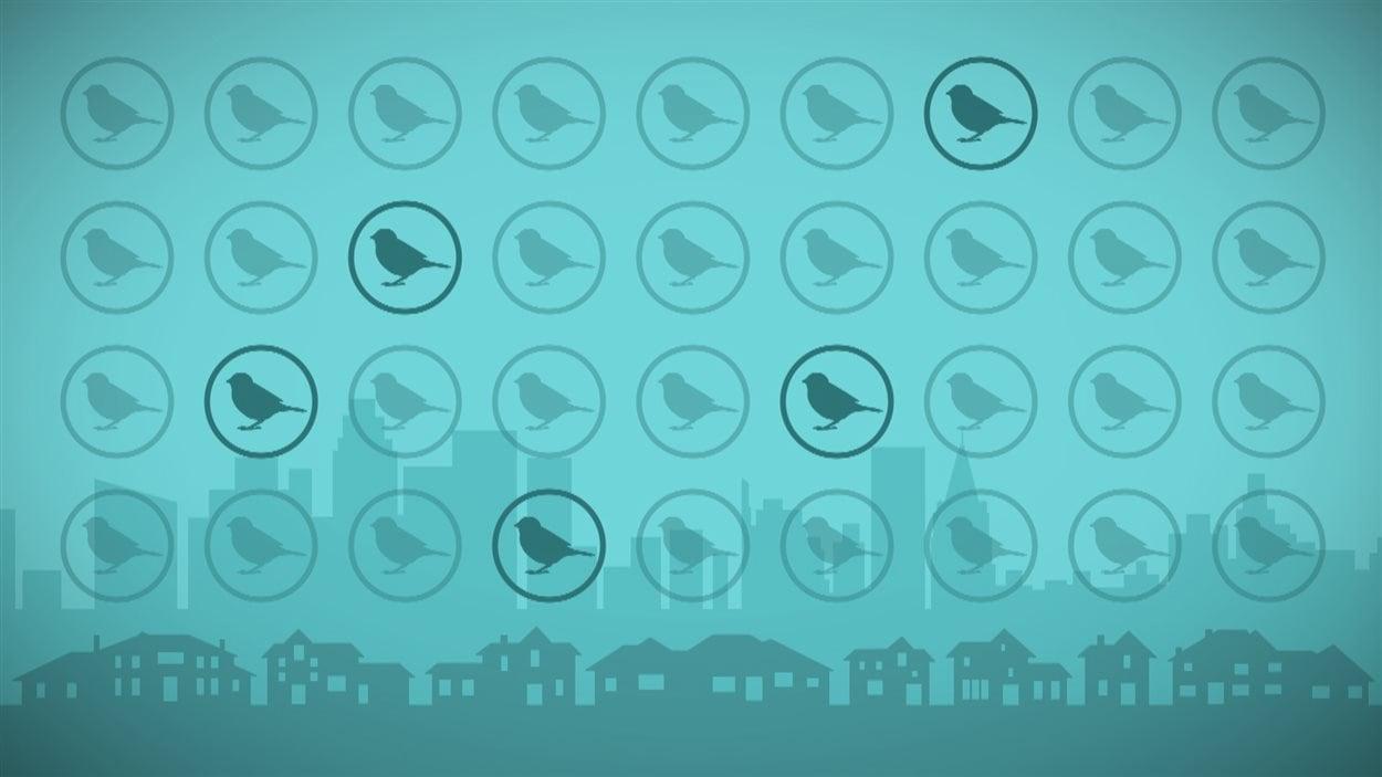 Capsule infographique sur le déclin des différentes espèces d'oiseaux.