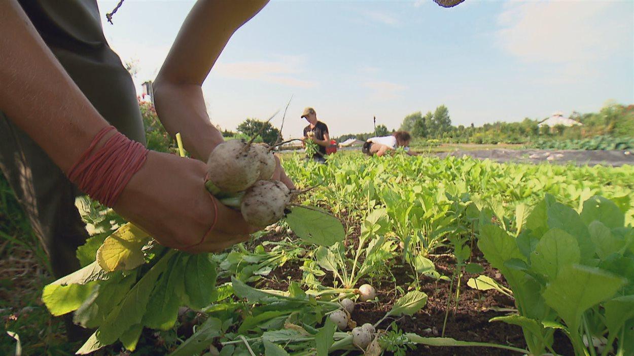 Les jeunes agriculteurs peuvent apprendre à bien vivre de leur métier en produisant sur de plus petites surfaces.