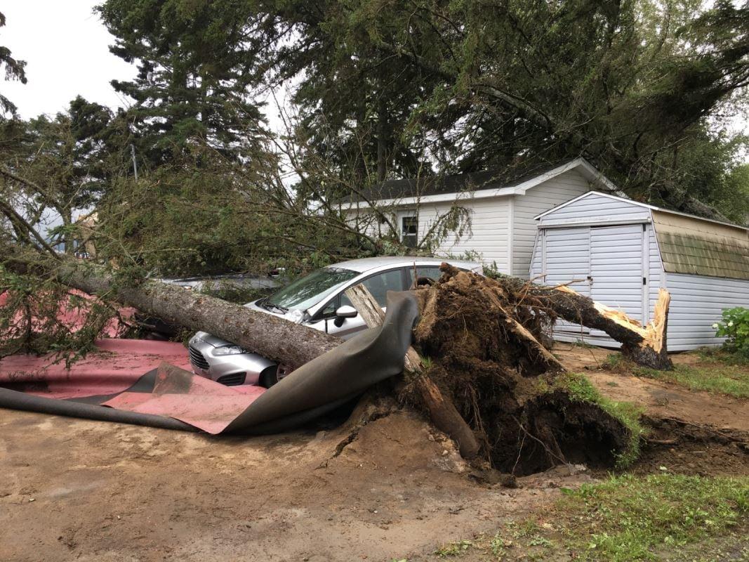 Un arbre déraciné sur un terrain de camping