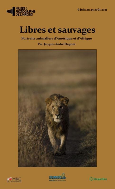 Une affiche montrant un lion et le nom « Libres et sauvages, portraits animaliers d'Amérique et d'Afrique », par Jacques André Dupont.
